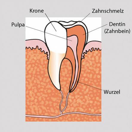 parodontolgie18
